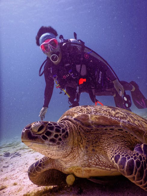Benefits of Becoming a Certified Scuba Diver